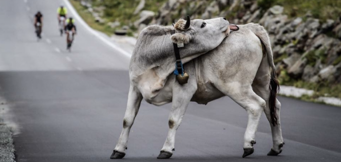Ötztaler-Radmarathon-Header