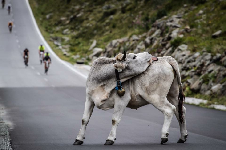 Ötztaler-Radmarathon-Kuh